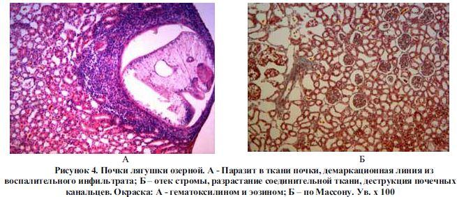 цитросепт от паразитов отзывы